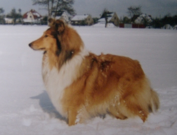 Collie , Collies, Bella�s Best...., Lassie, Colliez�chter